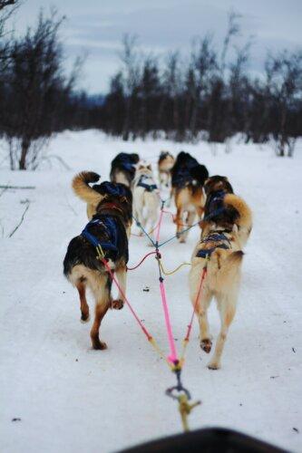 Kiruna: Aktivitäten