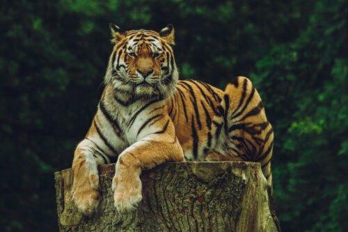 Lolland: Safaripark Knuthenborg