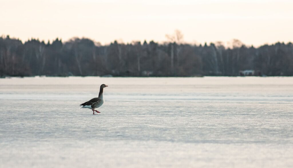 Örebro: Naturschutzgebiet Oset-Rynningeviken