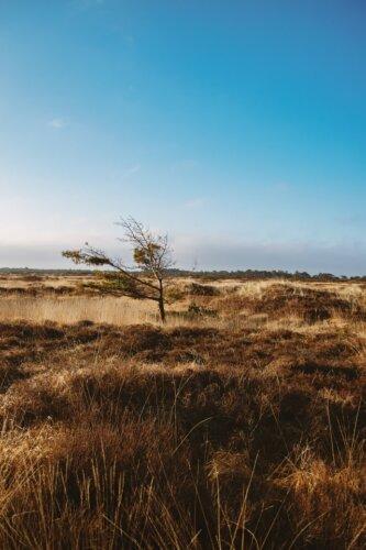 Römö:Touren und Sehenswürdigkeiten in der Natur