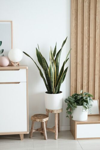 Skandinavische Blumenständer: So integrierst du mehr Pflanzen in deine Einrichtung