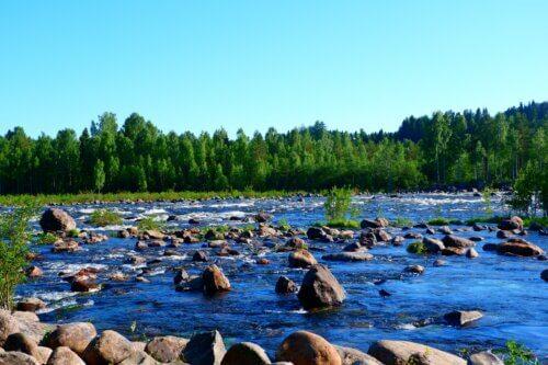 Umeå: Natur